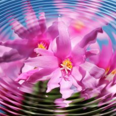 Menstruación consciente autoconocimiento terapia y empoderamiento menstrual