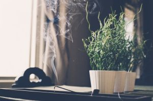 Fitoenergética energía vibracional de las plantas sanación verde terapia y empoderamiento menstrual